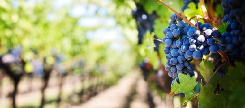 Most Common Wine Myths – Busted