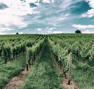 The 10 Best Vineyards in the USA